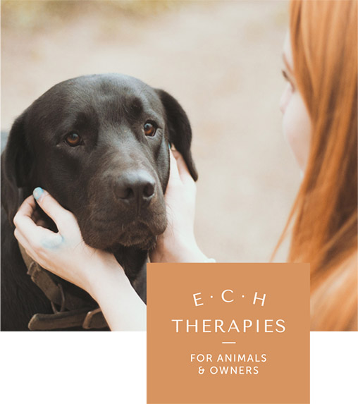ECH therapies For Animals & Owners