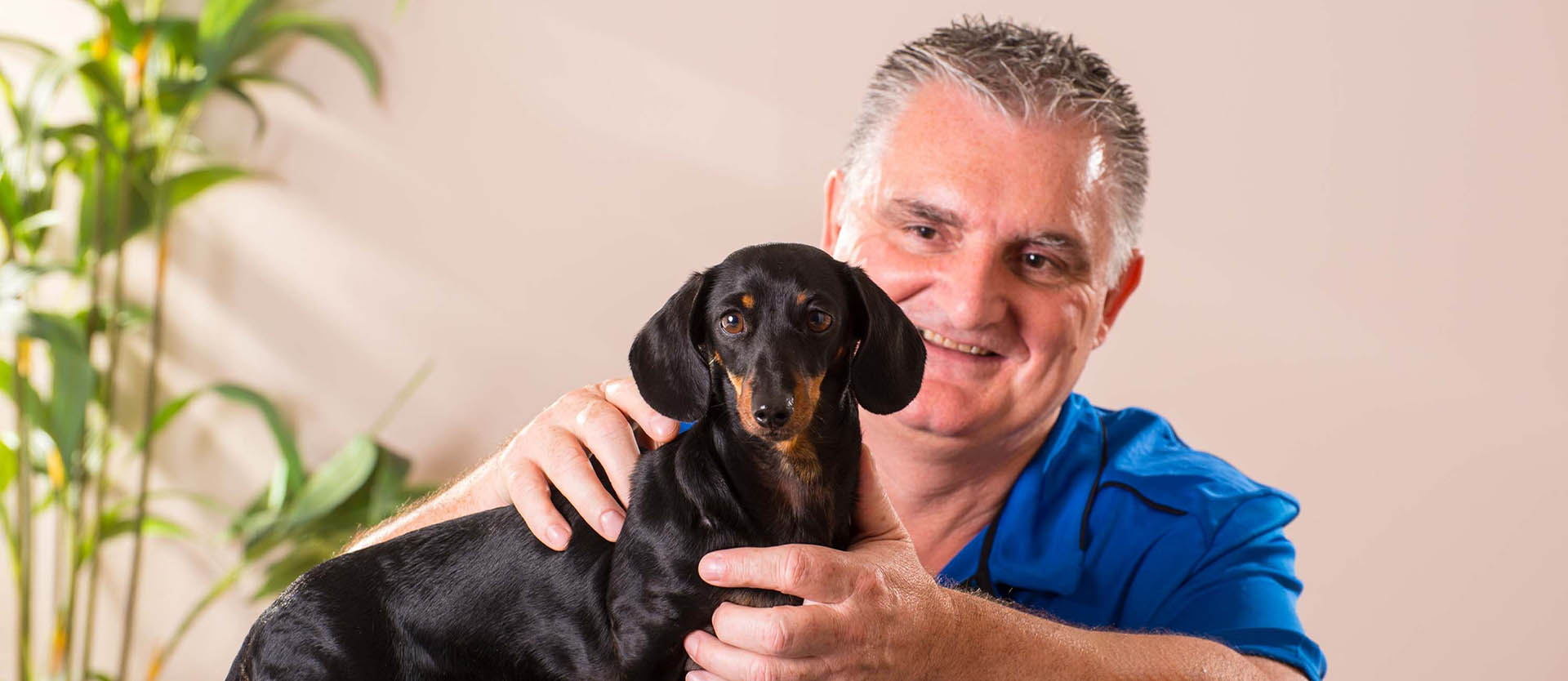 Service Menu - Dog Treatment
